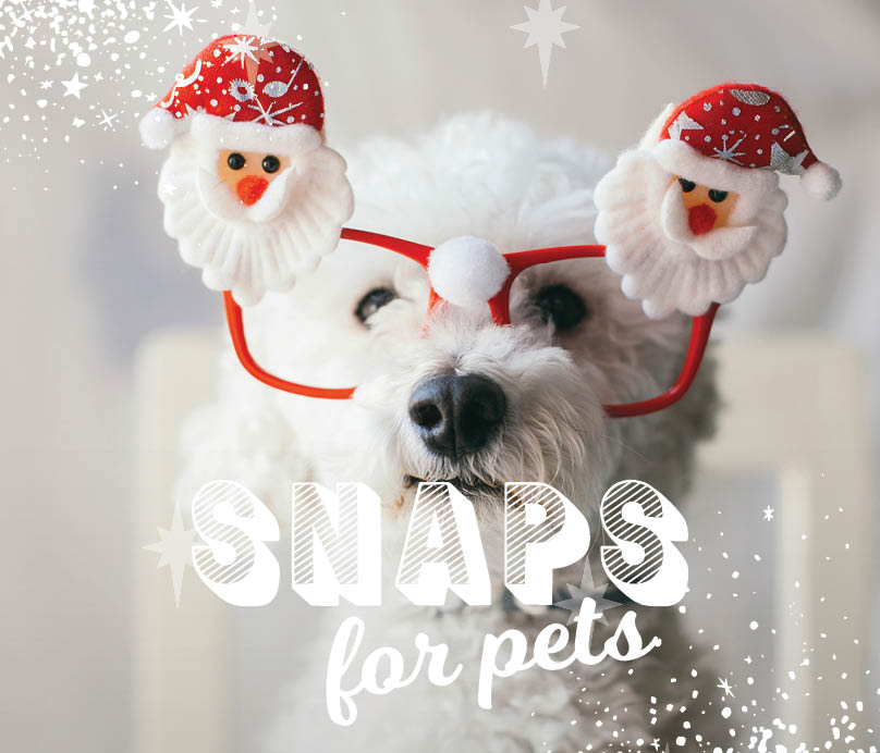 CH4806_Xmas 2019_Web Tiles_Snaps for pets_404x346px