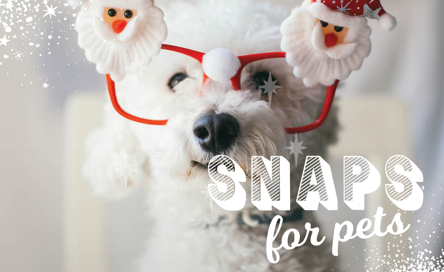 CH4806_Xmas 2019_Web Tiles_Snaps for pets_844x517px